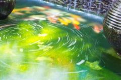 Koja karpiów pływać Zdjęcia Royalty Free