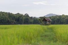 Kojan på risfältet som är nordlig av Thailand Arkivbild