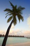 Kojor i havet och en palmträd Royaltyfri Foto