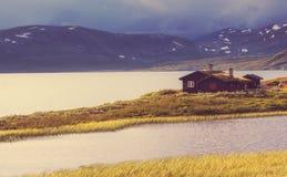 Kojor i Norge Arkivbild