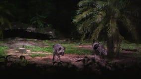 Kojota bieg przez drewien przy nocą zbiory