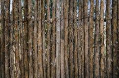 Kojote-Zaun Lizenzfreies Stockfoto