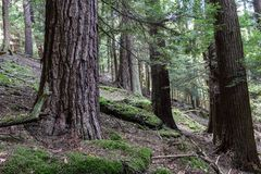 Kok Forest State Park Pennsylvania Stock Foto's