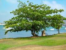 Kok ` s-het Landen en de boom van de Strandamandel Stock Afbeelding