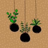 Kokedama three plants set hand drawn illustration on brown font stock illustration