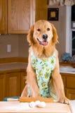 Kokende hond Royalty-vrije Stock Afbeeldingen