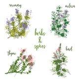 Kokende kruiden en kruiden in waterverfstijl Rosemary, melissa, basilicum, thyme Stock Foto