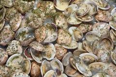 Kokende tweekleppige schelpdieren stock fotografie