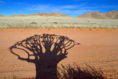 Kokerboom shadow Stock Images