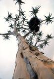 kokerboomtree Arkivfoto