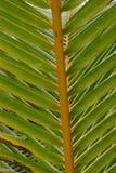 Koki Beach Palm Royalty Free Stock Images