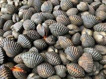 Kokkel bij de markt voor het koken van Thaise zeevruchten Royalty-vrije Stock Afbeelding