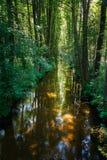 Kokna flod nära Drawsko Pomorskie, Polen Royaltyfri Bild