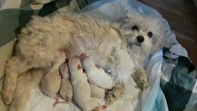 Koko и ее новорожденные стоковое изображение rf