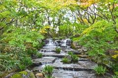 Koko en姬路市庭院在秋天季节期间的 免版税库存照片
