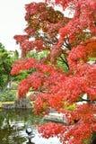 Koko en姬路市庭院在秋天季节期间的 库存图片