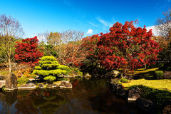 Kokoen autumn foliage Garden, Himeji Royalty Free Stock Photo