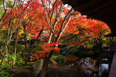 Kokoen Garden with autumn foliage Stock Image