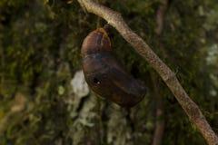 Kokon im Baum lizenzfreie stockbilder