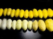Kokonreihenordnung durch Farbe Lizenzfreie Stockfotografie