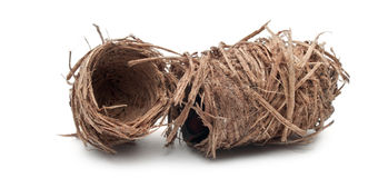 Kokons des roten Palmenrüsselkäfers Lizenzfreie Stockfotos