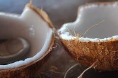 Kokosmark Stockfotos