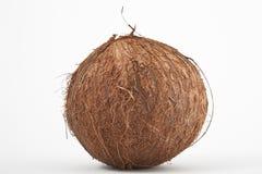 kokosnöt Arkivbild