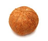 kokosnöt Royaltyfri Bild