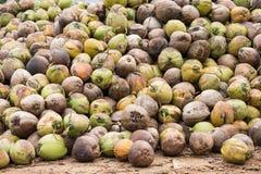 Kokosnöt royaltyfria foton