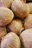 kokosnöt Royaltyfria Bilder