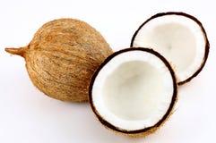kokosnöt Fotografering för Bildbyråer