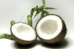 kokosnöt 9 Arkivbilder