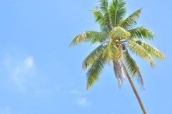 Kokosnöt eller palmträd med moln och område för blå himmel och copyspace Fotografering för Bildbyråer