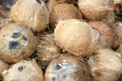 Kokosnöt för att laga mat den thai mat och efterrätten royaltyfri bild