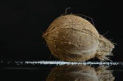 Kokosnöt i ett closeupfotografi Royaltyfri Foto