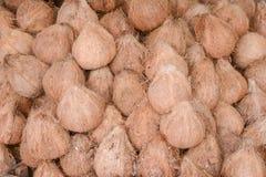 Kokosnöt i marknaden Royaltyfria Bilder