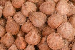 Kokosnöt i marknaden Arkivfoto