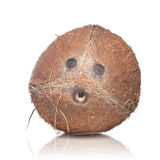 kokosnöt isolerad white Royaltyfri Foto
