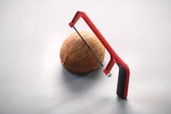 Kokosnöt med en chainsaw Arkivfoton