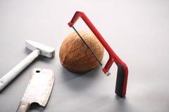 Kokosnöt med en chainsaw Arkivfoto