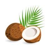 Kokosnöt med halva och palmblad bakgrund isolerad white royaltyfri illustrationer
