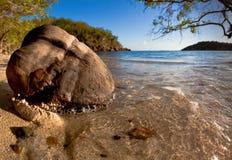 Kokosnöt med karibisk bakgrund royaltyfri fotografi