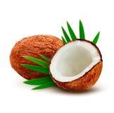 Kokosnöt med leaves Arkivbild