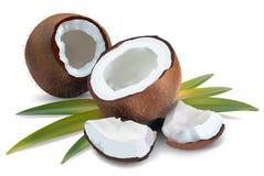Kokosnöt med sidor Arkivfoto