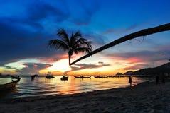 Kokosnöt med solnedgång på stranden Royaltyfri Fotografi