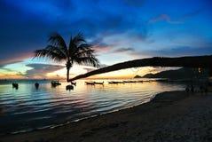 Kokosnöt med solnedgång på stranden Royaltyfria Foton