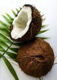 Kokosnöt och blad Royaltyfri Foto