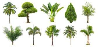 Kokosnöt och palmträd, bambu, banan, Tako, isolerat träd på vit bakgrund, royaltyfria bilder
