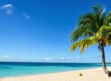 Kokosnöt på en exotisk strand med palmträdet som skriver in havet på bakgrunden av en sandig strand Arkivbilder