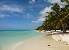 Kokosnöt på en vit strand Arkivfoton